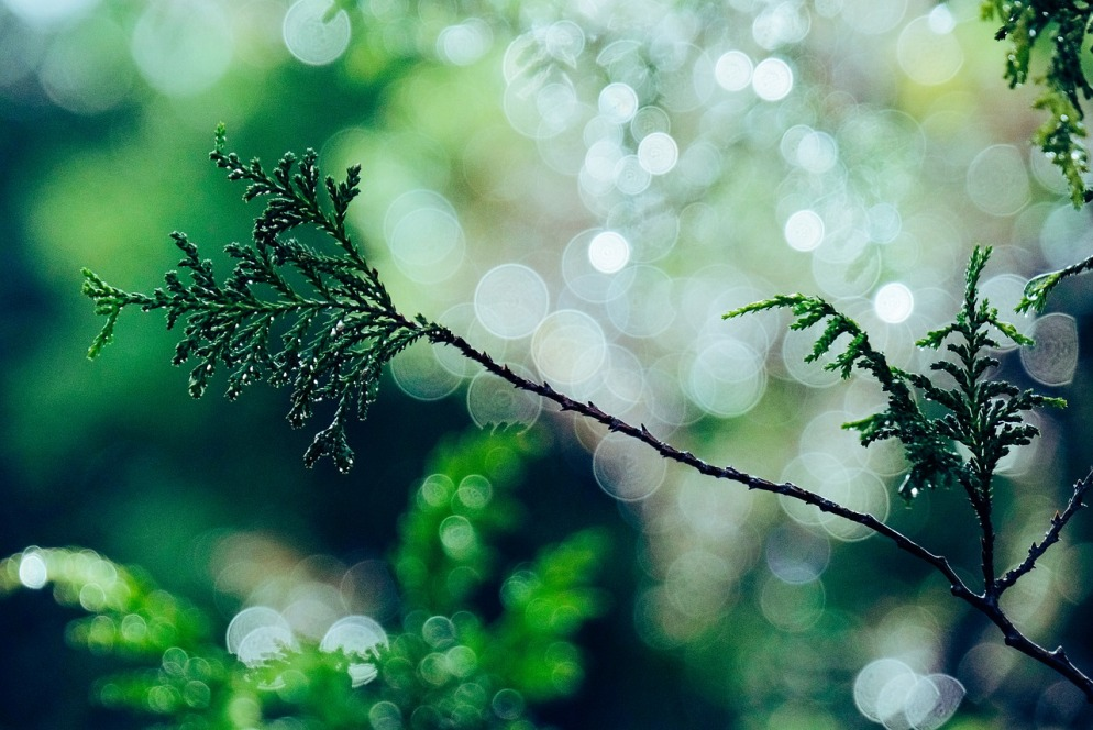 tree-4710476_1280